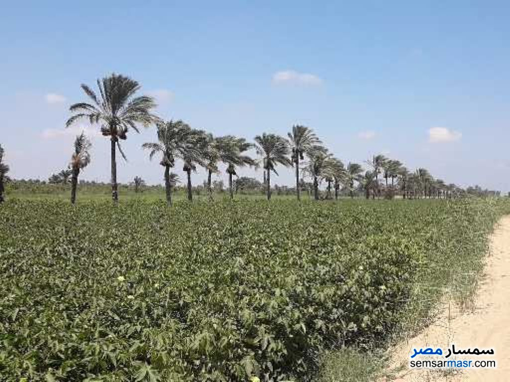 Photo 2 - Farm 25 acre For Sale Sinbillawain Daqahliyah
