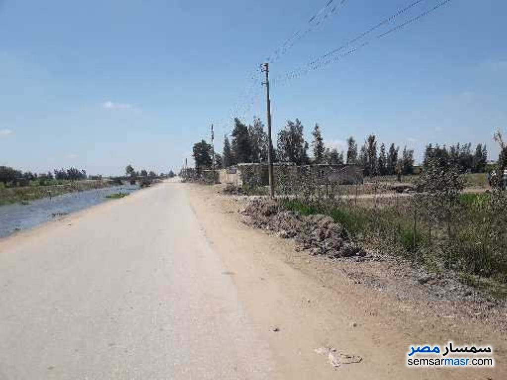 Photo 3 - Farm 25 acre For Sale Sinbillawain Daqahliyah