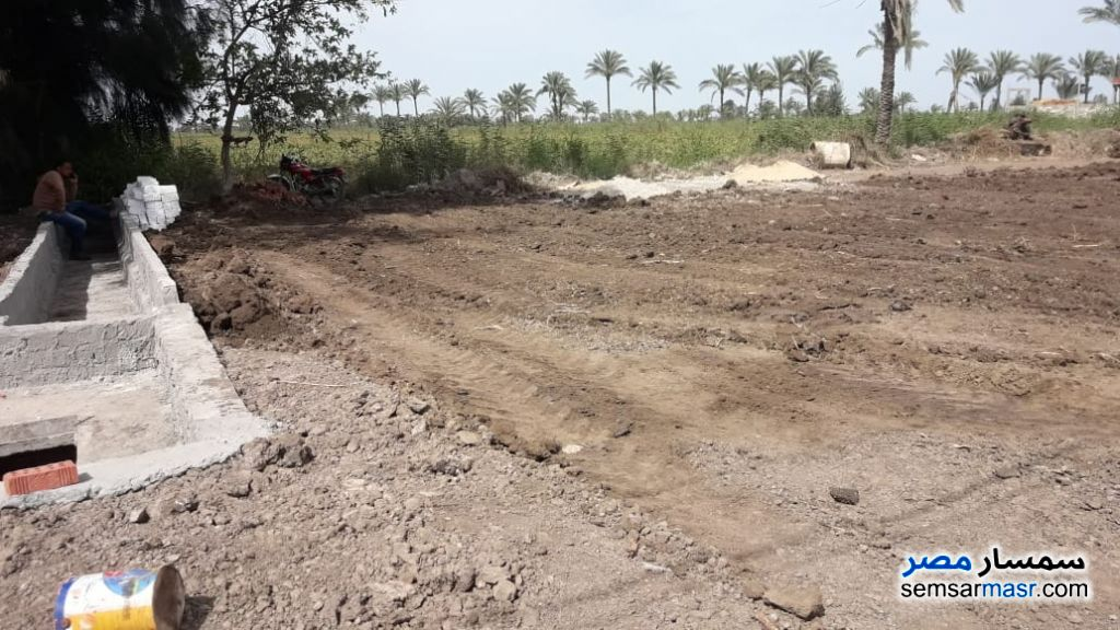 Photo 10 - Farm 25 acre For Sale Sinbillawain Daqahliyah