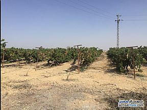 Ad Photo: Farm 6 acre in Sphinx City  6th of October