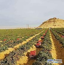 Ad Photo: Farm 5 acre in Fayoum City  Fayyum