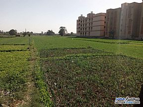 Ad Photo: Farm 175 kirat in Luxor City  Luxor