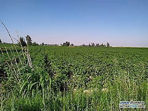 Ad Photo: Farm 6 acre in El Hamam  Matrouh