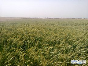 Ad Photo: Farm 20 acre in New Fayoum  Fayyum