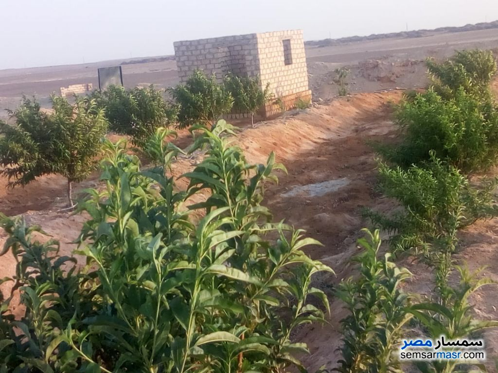 Photo 1 - Farm 70 acre For Sale Wadi Al Natrun Buhayrah