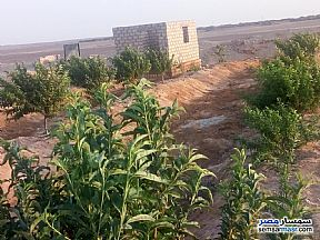 Farm 70 acre For Sale Wadi Al Natrun Buhayrah - 1