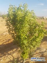 Farm 70 acre For Sale Wadi Al Natrun Buhayrah - 4