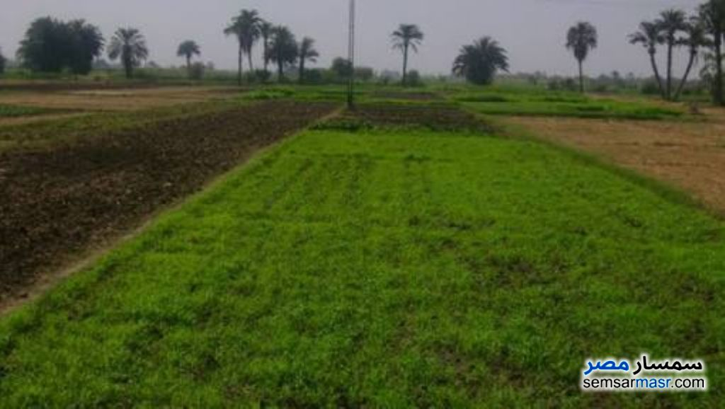 Photo 1 - Farm 6 acre For Sale Ganoub District Port Said