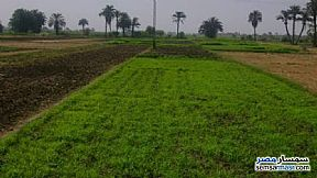 Farm 6 acre For Sale Ganoub District Port Said - 1