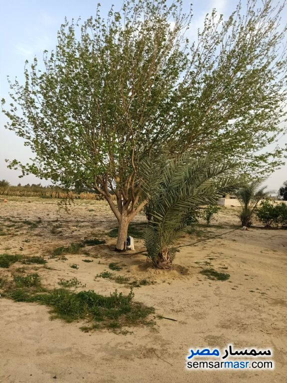 Photo 1 - Farm 140 acre For Sale Wadi Al Natrun Buhayrah