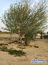 Ad Photo: Farm 140 acre in Wadi Al Natrun  Buhayrah