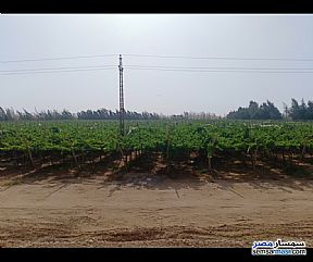 Ad Photo: Farm 100 acre in Samalut  Minya