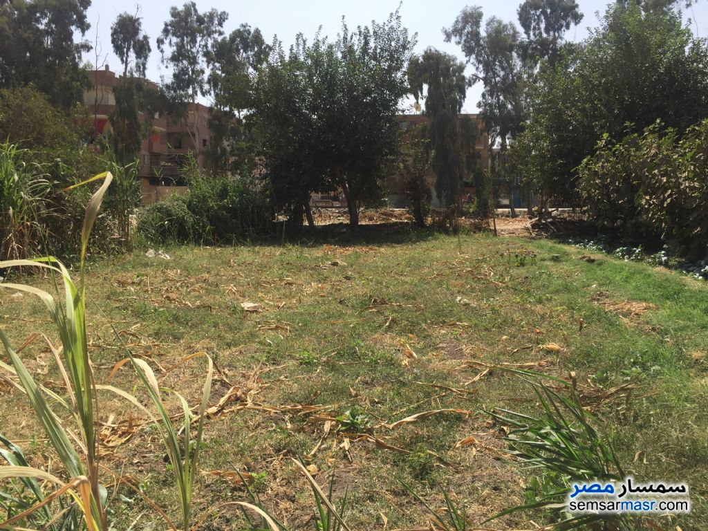 Photo 2 - Land 100 sqm For Sale Banha Qalyubiyah