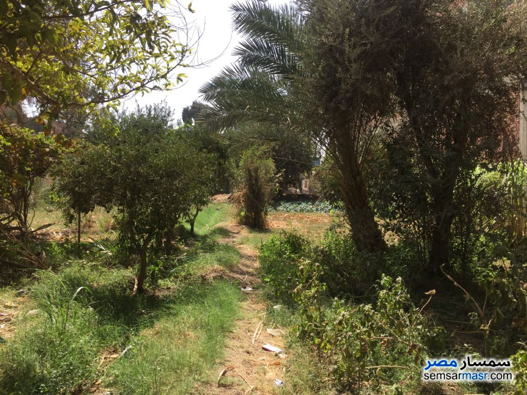 Photo 1 - Land 100 sqm For Sale Banha Qalyubiyah