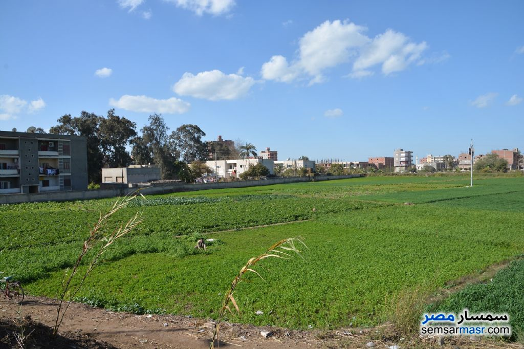 Photo 3 - Farm 3,084 sqm For Sale Shirbin Daqahliyah