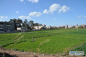 Farm 3,084 sqm For Sale Shirbin Daqahliyah - 3