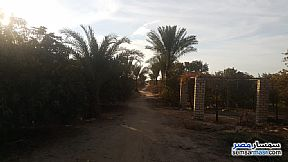 Ad Photo: Farm 5 acre in Tamiya  Fayyum