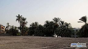 Ad Photo: Land 26000 sqm in Luxor City  Luxor