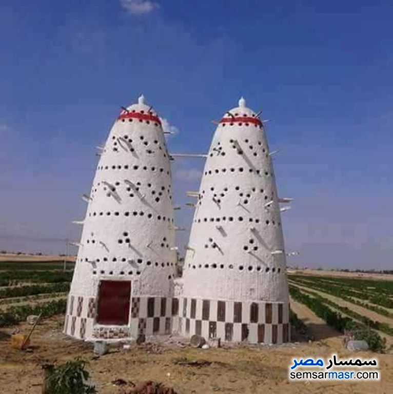 Photo 1 - Farm 70 acre For Sale New Fayoum Fayyum