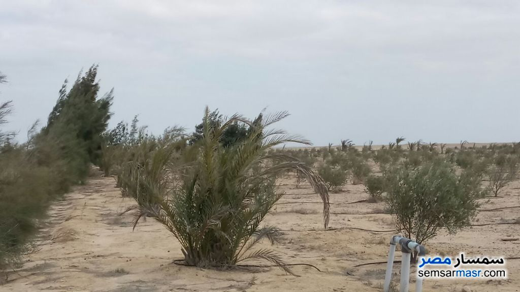 Photo 3 - Land 5 acre For Sale Wadi Al Natrun Buhayrah