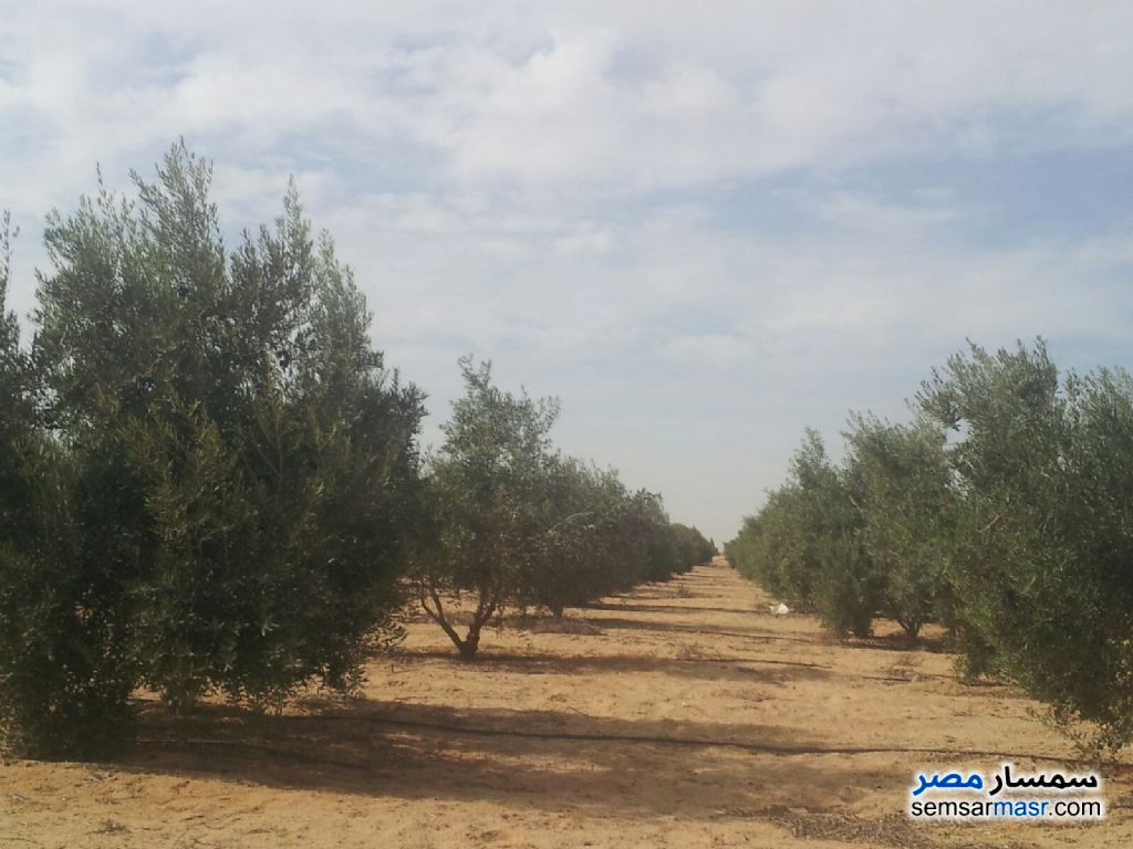 Photo 2 - Land 5 acre For Sale Wadi Al Natrun Buhayrah