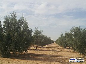 Land 5 acre For Sale Wadi Al Natrun Buhayrah - 2
