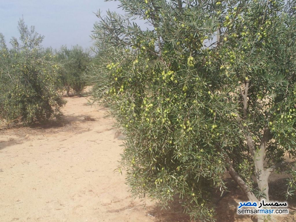 Photo 4 - Land 5 acre For Sale Wadi Al Natrun Buhayrah