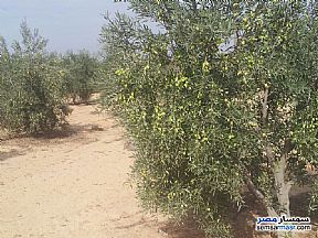 Land 5 acre For Sale Wadi Al Natrun Buhayrah - 4