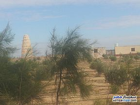Land 5 acre For Sale Wadi Al Natrun Buhayrah - 1