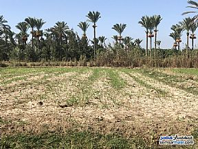 Ad Photo: Land 281 sqm in New Damietta  Damietta