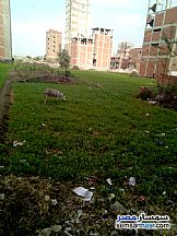 Ad Photo: Land 225 sqm in Zagazig  Sharqia