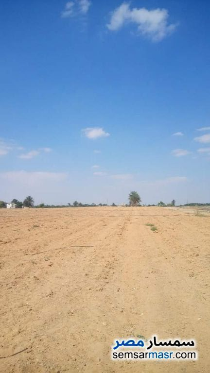 Ad Photo: Farm 40 acre in Al Qawseyah  Asyut