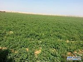 Ad Photo: Farm 48 acre in Fayoum City  Fayyum
