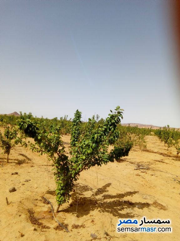 Photo 1 - Farm 170 acre For Sale Bahariya Oasis Giza