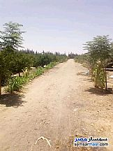 Ad Photo: Farm 50 acre in El Ayat  Giza