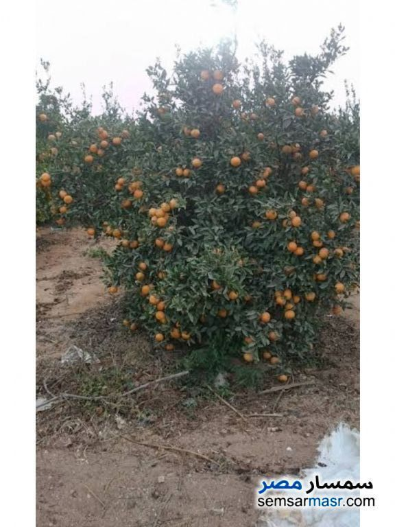 Ad Photo: Farm 5 acre in Badr  Buhayrah