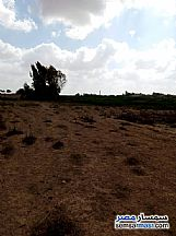 Ad Photo: Land 40000 sqm in Amereyah  Alexandira