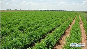 Ad Photo: Farm 15 acre in Suez District  Suez