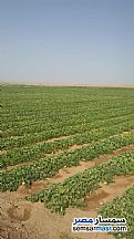 Ad Photo: Farm 50 acre in Nasr El Nouba  Aswan