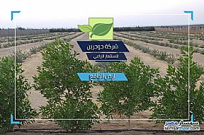 Ad Photo: Farm 2 acre in El Alamein  Matrouh