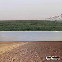 Ad Photo: Farm 50 acre in Siwa  Matrouh
