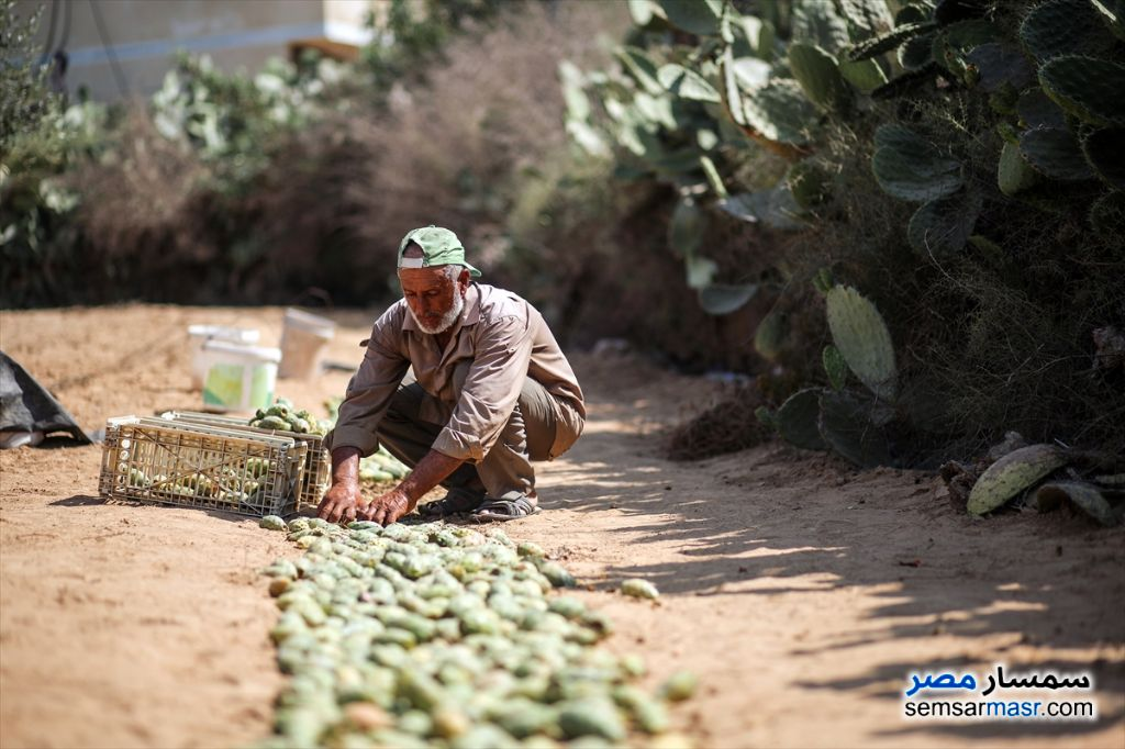 Photo 1 - Farm For Sale El Alamein Matrouh