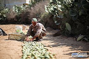 Ad Photo: Farm in El Alamein  Matrouh