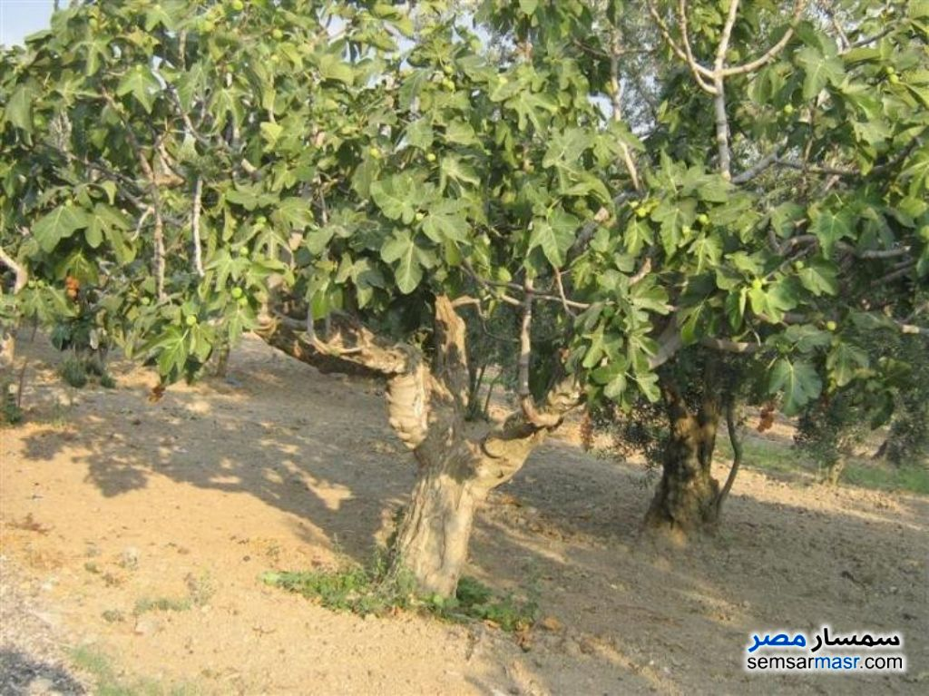 Photo 3 - Farm For Sale El Alamein Matrouh