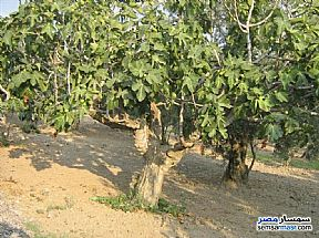 Farm For Sale El Alamein Matrouh - 3