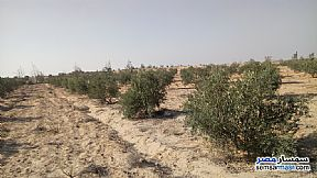 Ad Photo: Farm 10 acre in Wadi Al Natrun  Buhayrah