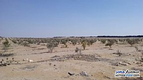 Ad Photo: Farm 3 acre in El Alamein  Matrouh