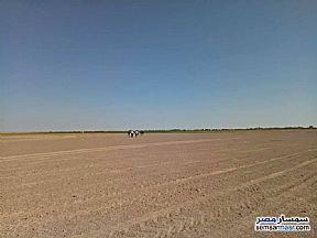 Ad Photo: Farm 100 acre in Siwa  Matrouh