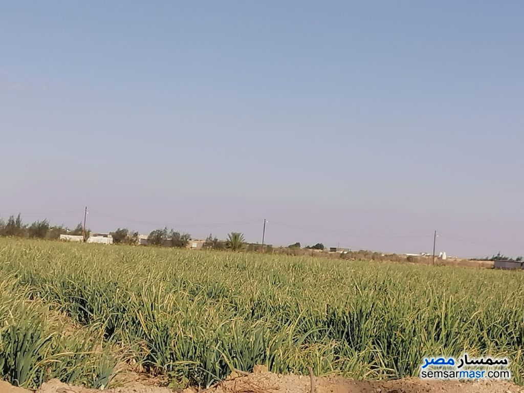 Ad Photo: Farm 20 acre in Fayyum