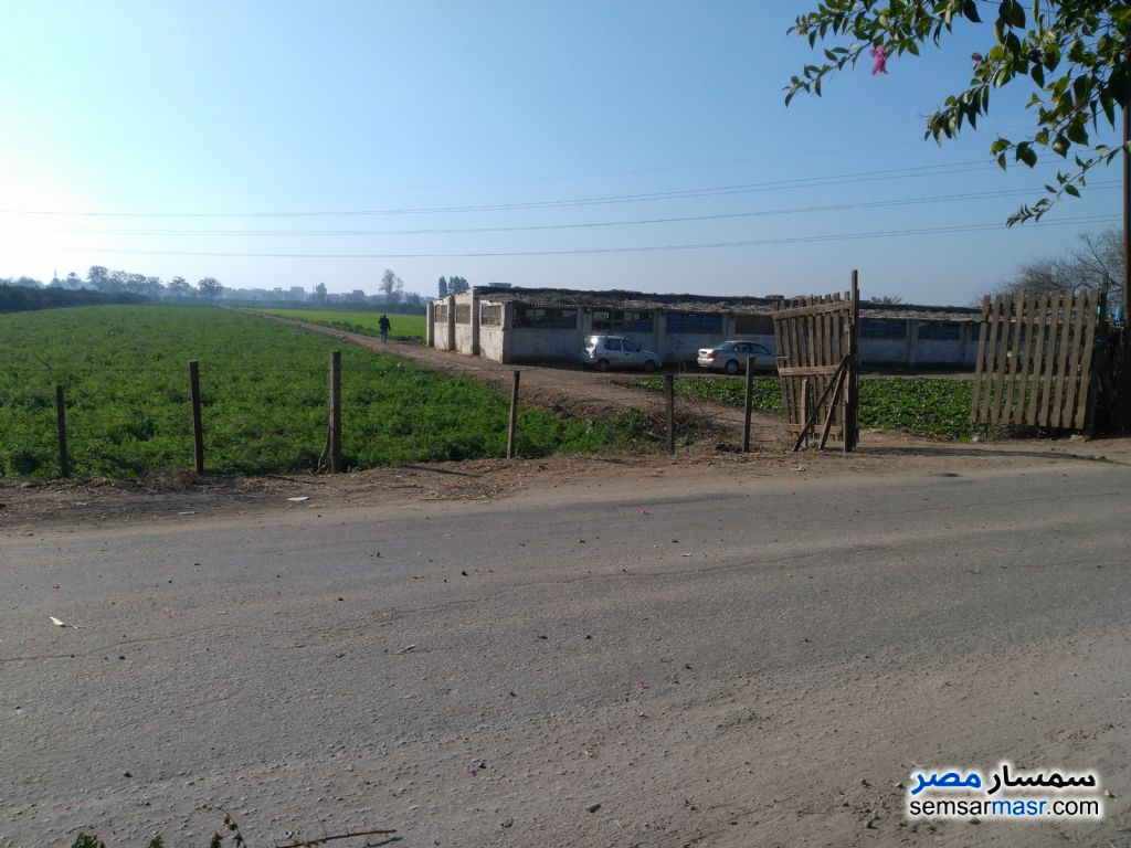 Photo 1 - Farm 9 acre For Sale Minya Al Qamh Sharqia